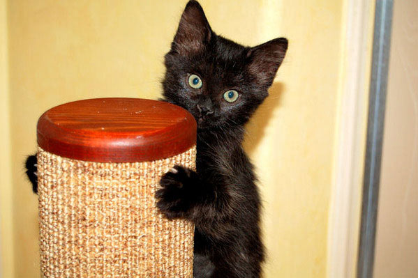 Purrfect Post Sisal Cat Scratching Posts - Veterinarian ...