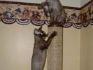 Hershey & Squirt
