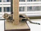 Dexter, Sinister, & Huggy Cat