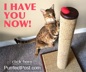 Cats playing with toys and scratching posts is great for their body and mind.