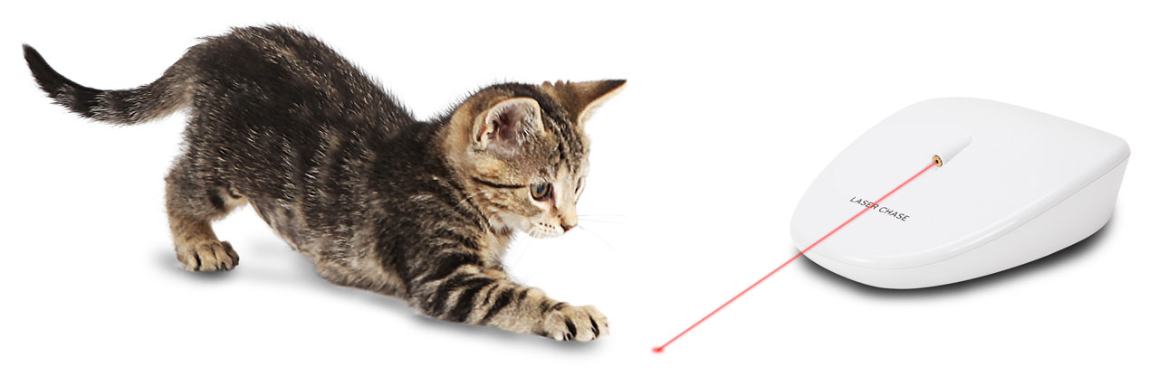 kitten playing with laser cat chase toy