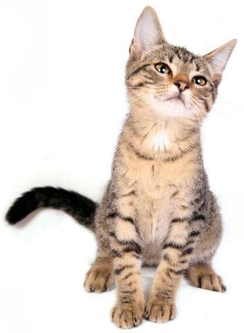 General Information About Cats