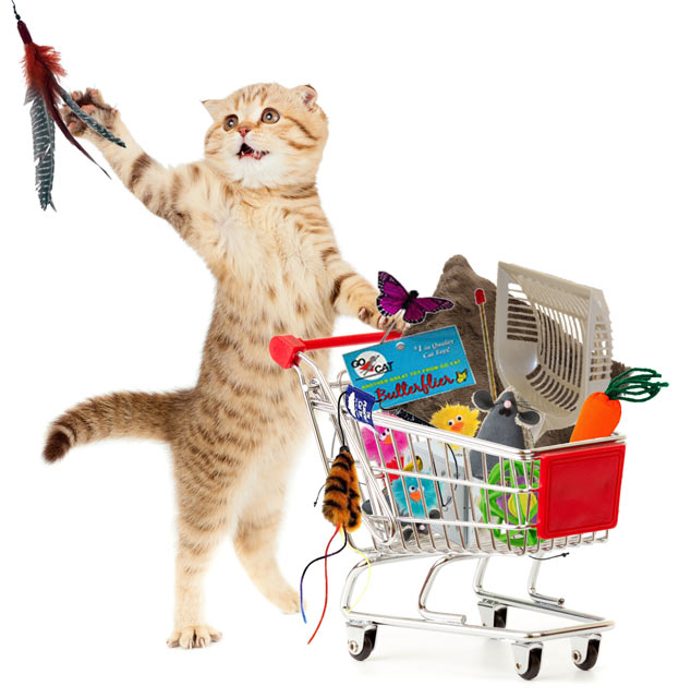 Kitty Cat shopping for favorite toys