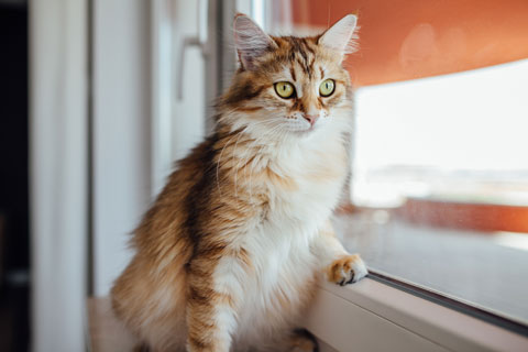 Indoor cats may develop negative behaviors in response to outdoor cats.