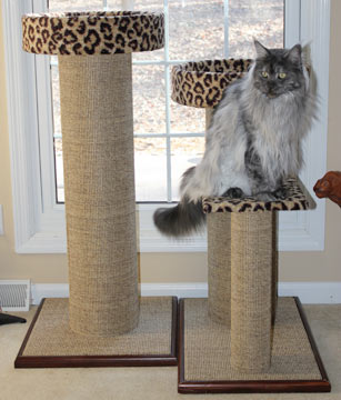 Cat condos are great for lounging and perching.