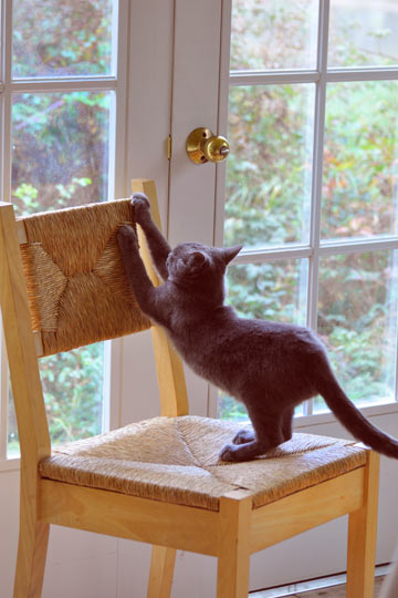 Cats need scratching posts in every area of the home.