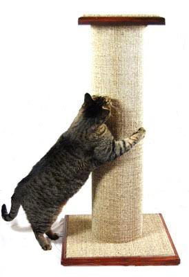 Cat Ignores Scratching Post