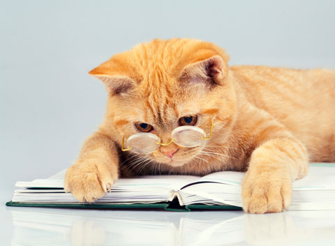 What notes would a cat write if she could?