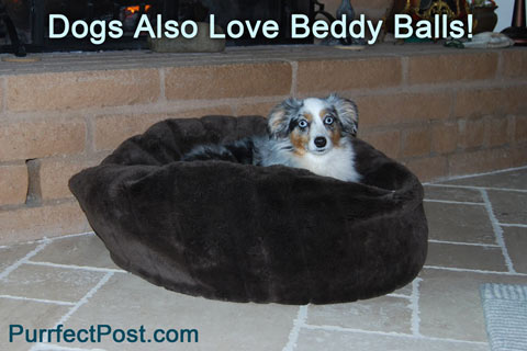 Dogs like Beddy Balls too