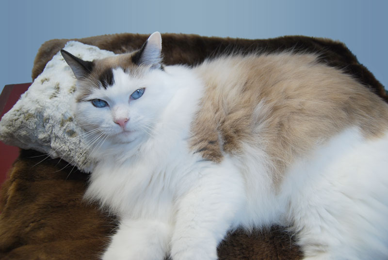 Lily enjoying her Muffin Pillow