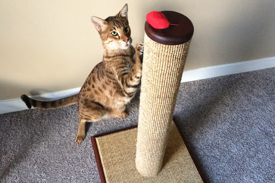 Image result for Tips For Choosing The Best Scratching Post For Your Cat